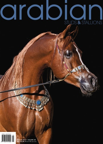 Arabian Studs & Stallions Preview