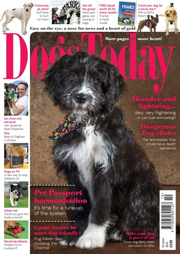 Dogs Today Magazine Preview