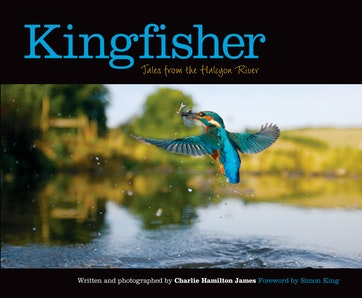 Kingfisher Preview