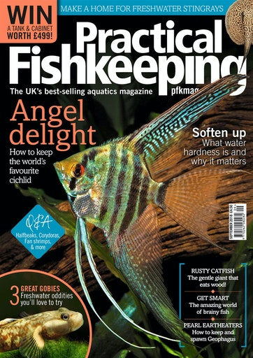 Practical Fishkeeping Preview