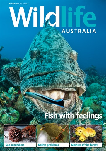 Wildlife Australia Preview