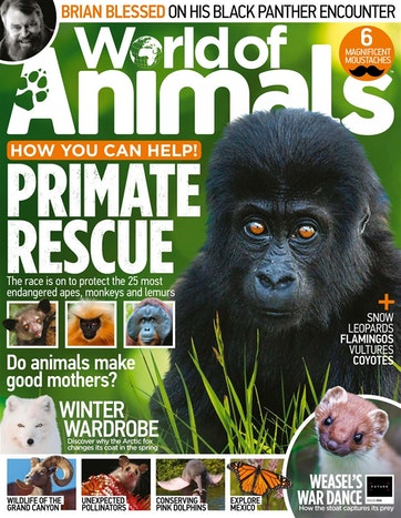 World of Animals Preview