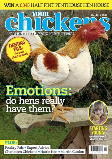 Your Chickens Preview